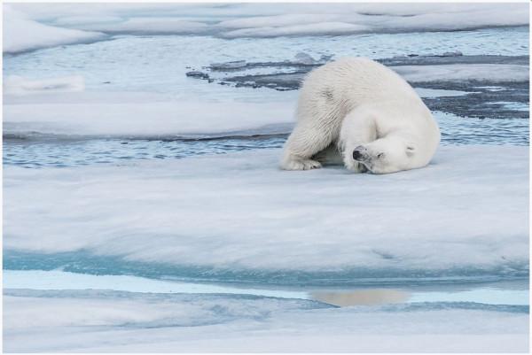 Anne Garola - CdF Nature papier, 5ème photo Diplôme WWF