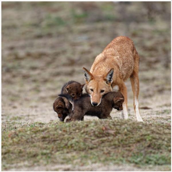 Bernard Fleurance - N1 Nature papier,  Diplôme WWF