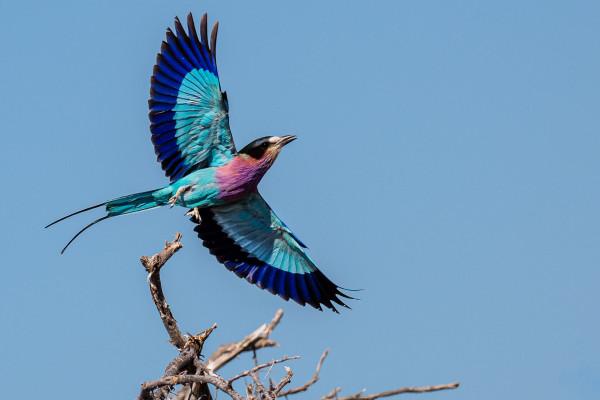 Laurent Chaput - Namibie en l'air - IP Nature